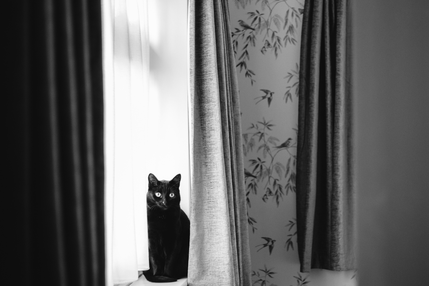 black cat on windowsill by Emma and Rich