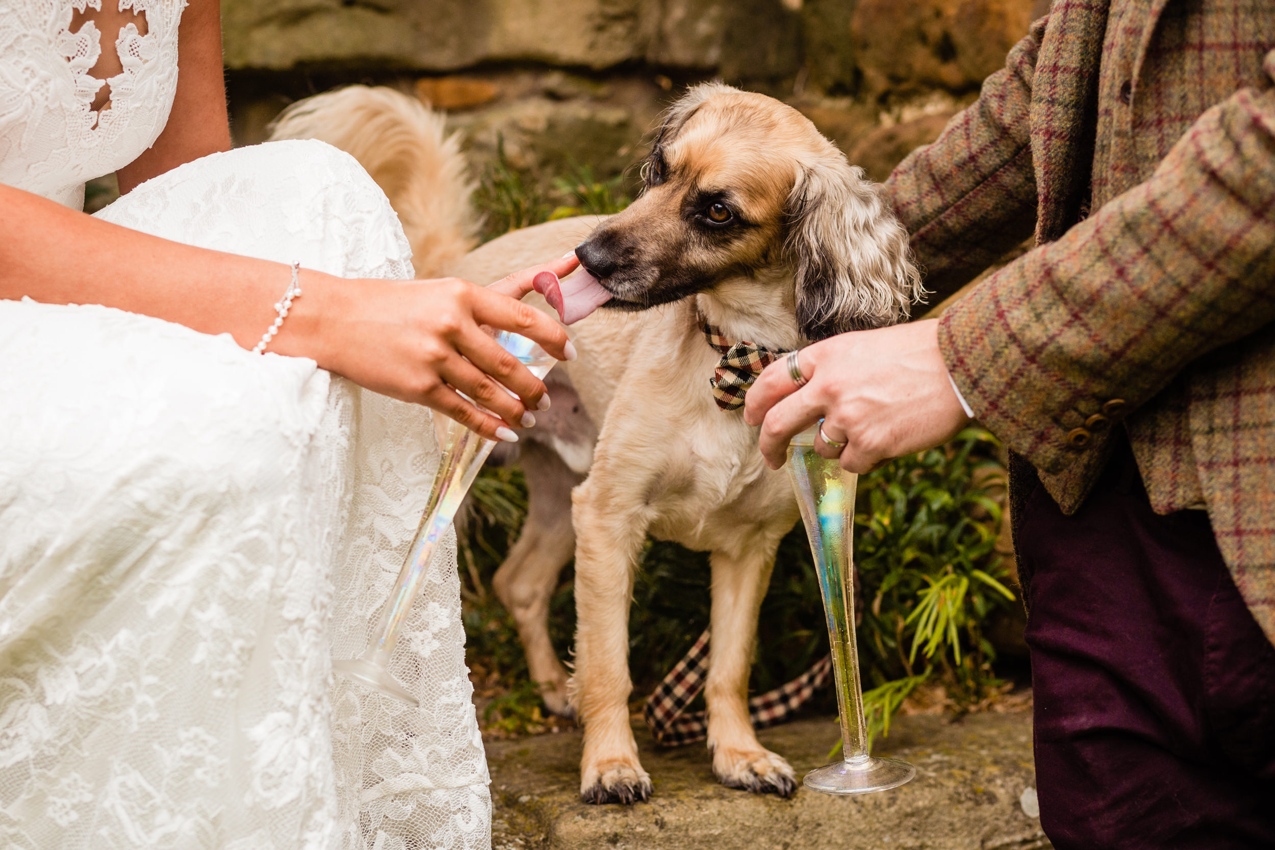 dog tries to drink champagne. esk valley wedding photography by emma and rich.